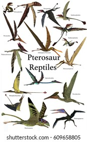 Pterosaur Reptiles 3d illustration - A collection of various Pterosaur reptiles from different prehistoric periods of Earth's history.