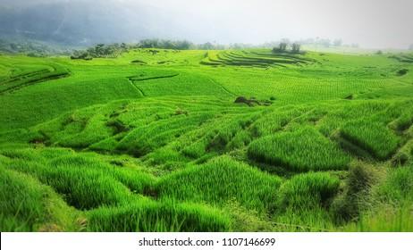 Pu Luong national park Vietnam