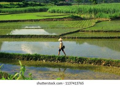 Pu Luong Nature Reserve (Thanh Hoa)