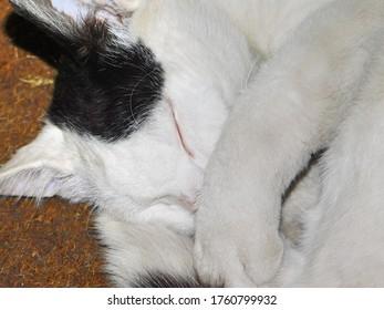 pubertal domestic little cat portrait