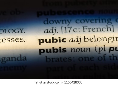 pubic word in a dictionary. pubic concept.