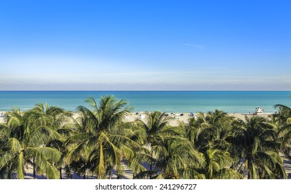 Public beach behind the palm trees in Miami Beach, Florida