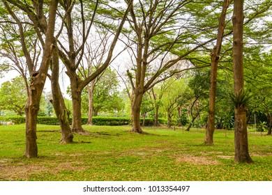 Public Garden and Botanic Garden, Chatuchak  Bangkok Thailand beauty nature