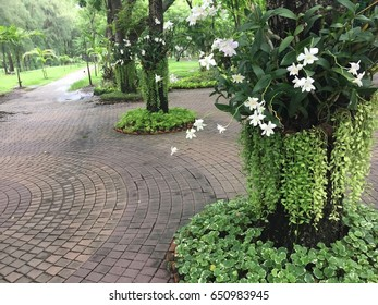 A Public park decorated with white orchids around big trees. Walkway laid with brown square tiles.