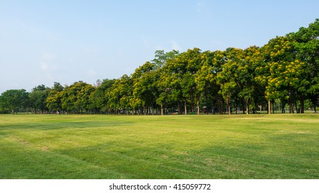 Public Park, green field and trees