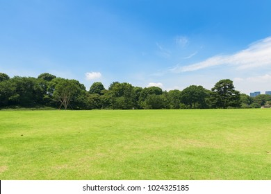 Public park with green grass field with blue sky and treebackground and copy space