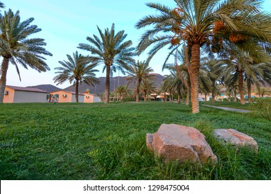 A public park in Hail, Saudi Arabia. It has mountains, palm trees with grass ground. Fine sky at the background with stone in foreground. There are also tents and cabins for families relaxation.