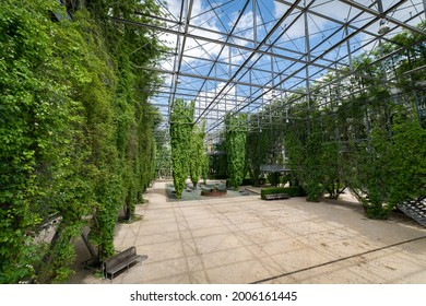 public park MFO in the Oerlikon quarter of Zurich city in Switzerland. This Park-Haus is a double-walled steel-framed construction covered with growing plants. - Shutterstock ID 2006161445