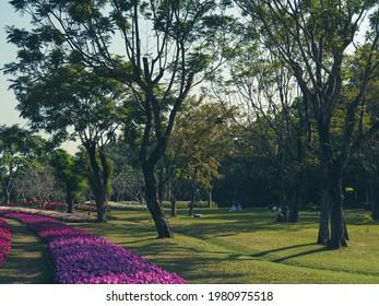 El parque público, con bonitos árboles grandes y césped limpio, hilera de Petunia rosa brillante, le dio al parque un ambiente colorido y alegre.