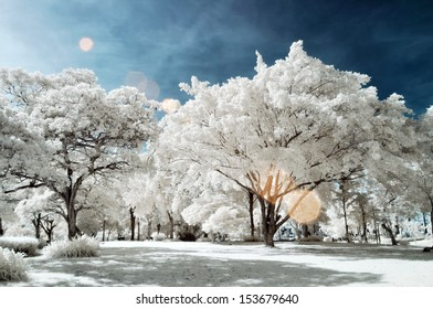 Public park at Nontaburi , Thailand taken in Near Infrared