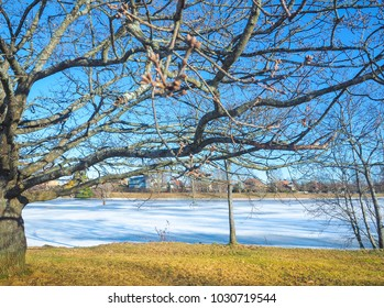 Public park with the river snow and the branches of the tree where the leaves fall with blue sky background in winter season at Karlstad, Sweden