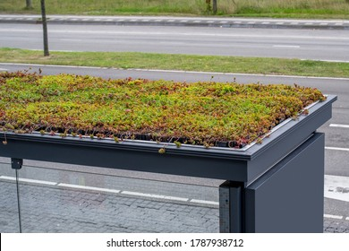 Public transport bus stop with green roof to clean air and attract bees, bird's eye view