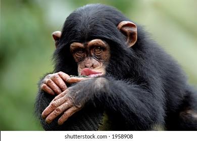 Singe Humour Images Photos Et Images Vectorielles De Stock Shutterstock
