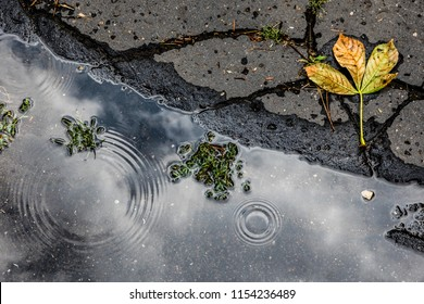 Puddle and automn leave on asphalt background