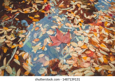 A puddle full of autumn leaves