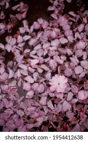 Puddle with pink sacura petals. Spring season, rainwater with flowers