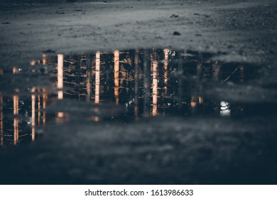 Puddle of water in the dark forest in the Evening