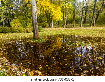Puddle of water reflection in autumn park