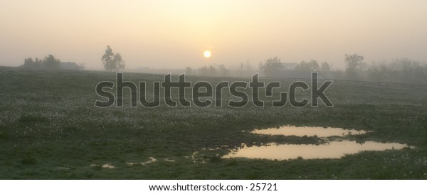 Puddles in a field at sunrise.