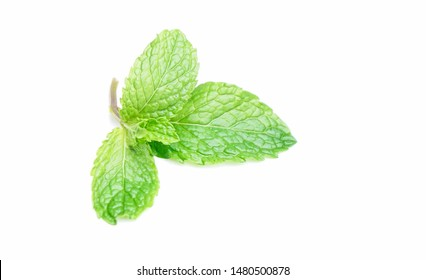 Pudina Leaf or Mint Leaves Isolated white background