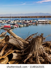PUEBLO, CO, USA-16 JULY 18: Interesting jumble of driftwood in foreground, with colorful boats on Lake Pueblo. Hazy mountains in background.  Lake Pueblo State Park.