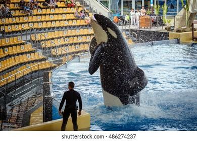 PUERTO DE LA CRUZ, TENERIFE, SPAIN - DECEMBER 2015:  Jumping grampus at oceanarium of Loro parque in Puerto de la Cruz, Tenerife island, Spain