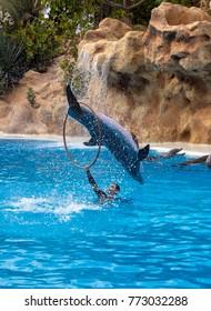 PUERTO DE LA CRUZ - TENERIFE, SPAIN 17. NOVEMBER 2017- Dolphin show in Loro Parque zoo