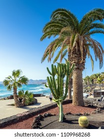 Puerto del Carmen, Spain - December 29, 2016: day view of boardwalk with palms and coastline in Puerto del Carmen, Spain. Puerto del Carmen is the main tourist town on the island of Lanzarote.