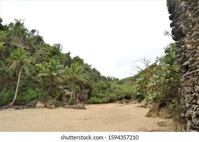 Puerto Hermina Overflow, Jungle Look