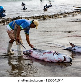 Puerto Lopez, Ecuador / Aug 19, 2016: Man cuts the fins off a dead shark, as part of processing the fish for human consumption in Puerto Lopez, Ecuador