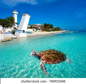 Puerto Morelos turtle photomount in Riviera Maya at Mayan Mexico
