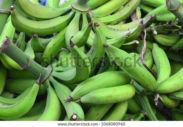 Puerto Rican Plantin Farm, Plantains, Adjuntas Farm, Agriculture, Mountain Farming, Fresh Plantain