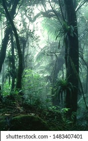 Puerto Rico, El Yunque National Forest, forest and mist,