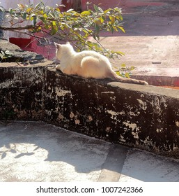 Puerto Vallarta, Jalisco/Mexico - January 19, 2018:  White kitty resting on ledge in downtown PV
