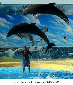 Puerto Vallarta, Jalisco/Mexico, January 8, 2018:  Incredible dolphin show in Nuevo Vallarta, Riviera Nayarit/Mexico