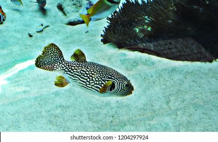 Pufferfish or Balloonfish or Blowfish or Bubblefish or Globefish or Swellfish or Toadfish.