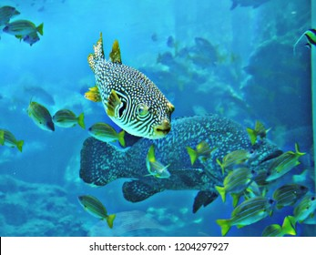 Pufferfish or Balloonfish or Blowfish or Bubblefish or Globefish or Swellfish or Toadfish.