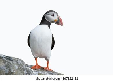 Puffin on rock against sky