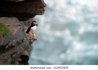 Puffin sitting on brown cliffs of a rocky coast of Mainland, largest of Orkney islands, with bluish water of a Norwegian Sea