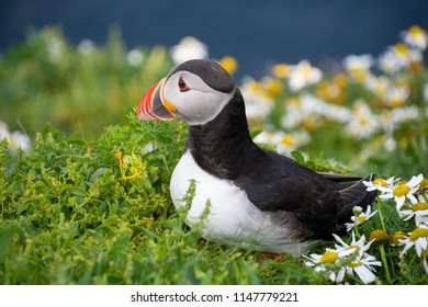 Puffin surrounded by flowers