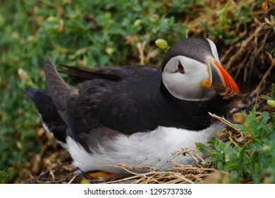 puffins at the Skellig islands.The island of Skellig Michael, also known as the Great Skellig, is home to one of Ireland's best-known, yet hard-to-reach medieval monasteries.