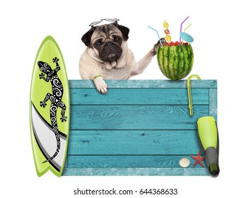 pug dog with blue vintage wooden beach sign, surfboard and summer watermelon cocktail, isolated on white background