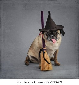 Pug dog dressed as a witch for Halloween sitting on a grey backdrop with a textured overlay.