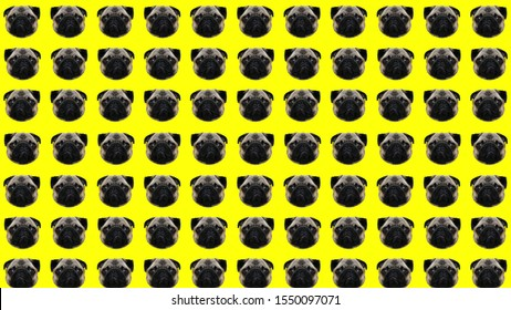 A lot of pug dog heads, crazy funny background