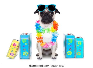 pug dog looking so cool with fancy sunglasses  and lots of bags