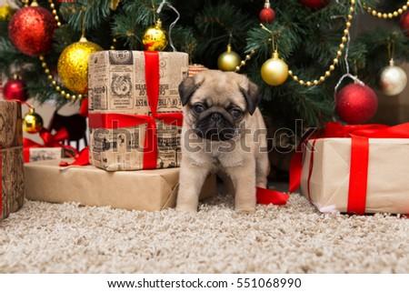 Pug Dog Near Christmas Tree Decorations Stock Photo Edit Now