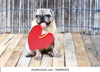 Pug dog with paper hearts, love you.