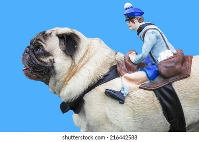 Pug dog with rubber puppet rider on blue background