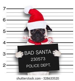 pug dog as santa claus for christmas , caught on mugshot with sugar cane in mouth