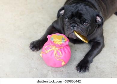 Pug dog saving money. (Funny pug dog laying with pink piggy bank)